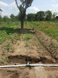Drip Irigasi Tetes di Lahan Pertanian