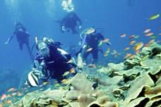 02-diving-bali-amed-potapeni