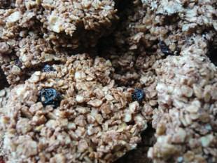 Rezept Schoko-Haferflocken-Keks, Knusprige, schokoladige Vollkorn-Keks, Knusper Müsli, Müsli-Plätzchen