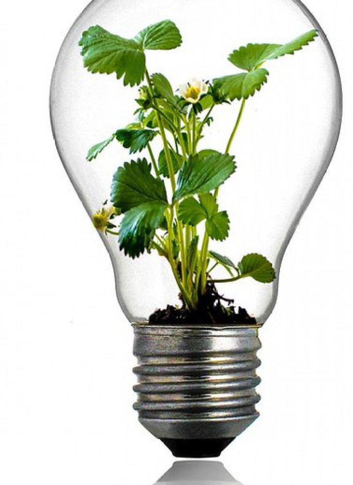 Eine Glühbirne mit Pflanzen darin