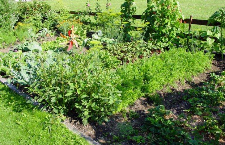 Ein typischer Selbstversorgergarten in Mischkultur