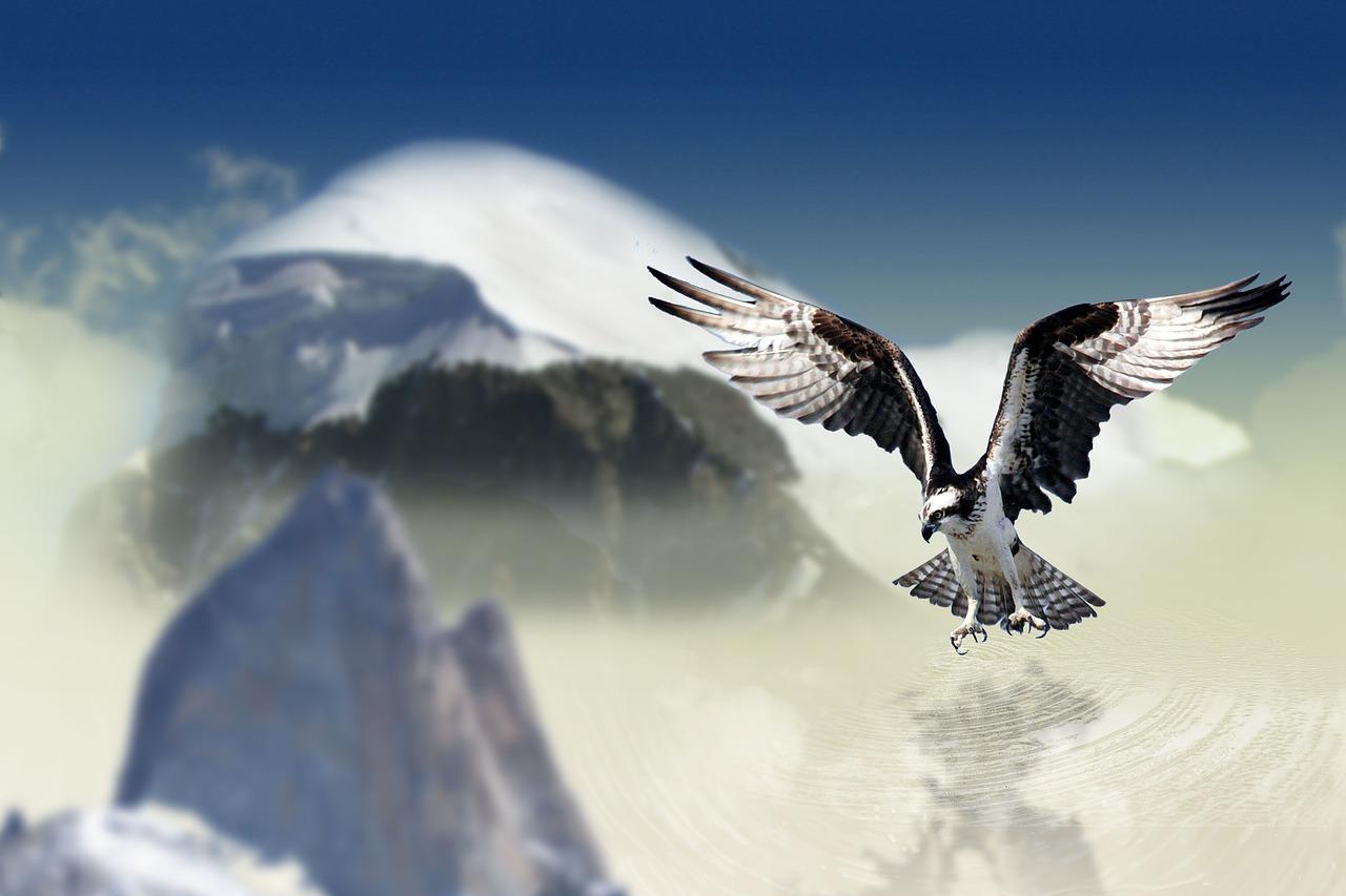 Adler vor Bergkulisse