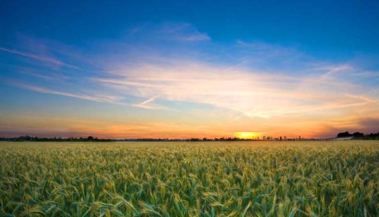 農業ビジネスで豪州に海外進出したい人が知っておくべきQLD州政府の日本人上席商務官