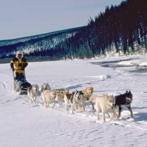 10. Course de Huskies à Anchorage, en Alaska