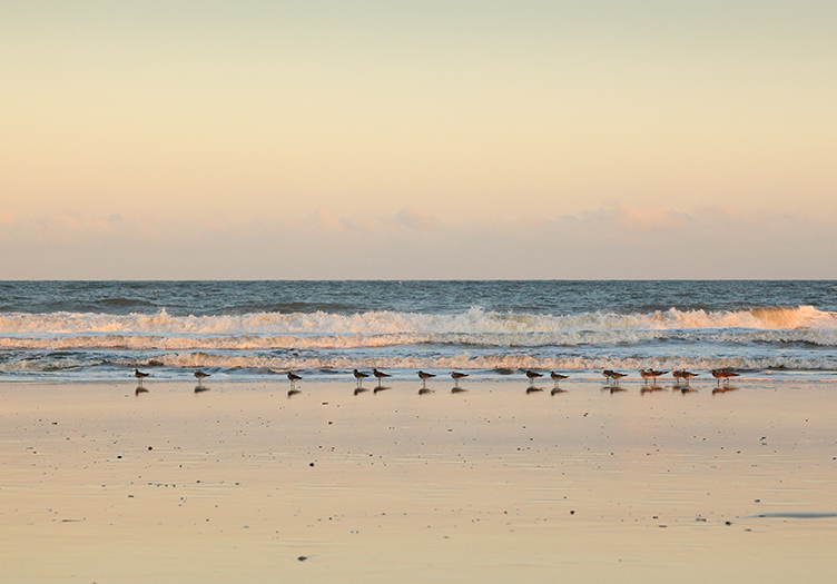 Elizabeth Point Birds on Beach