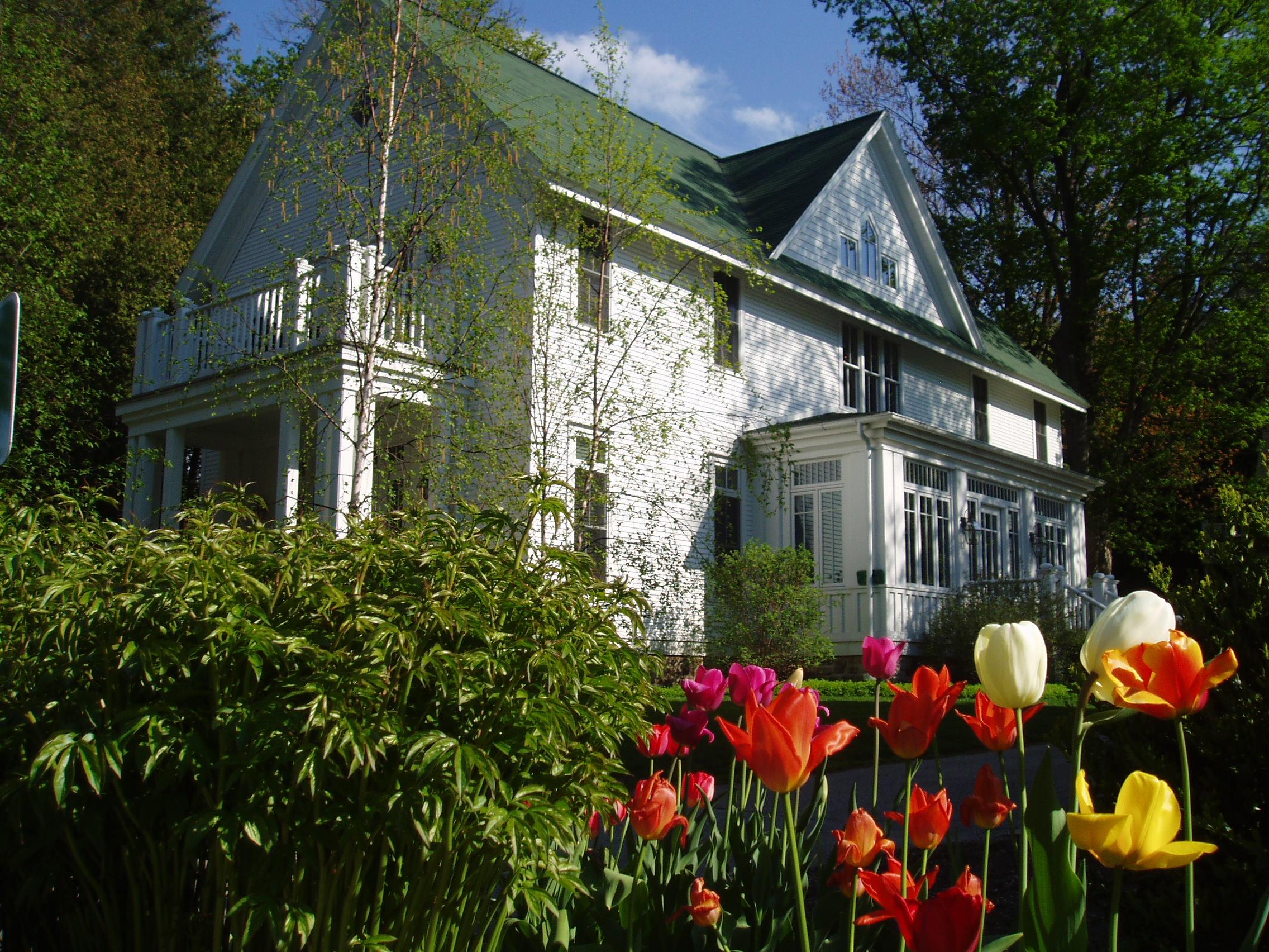 White Gull spring tulips.jpg