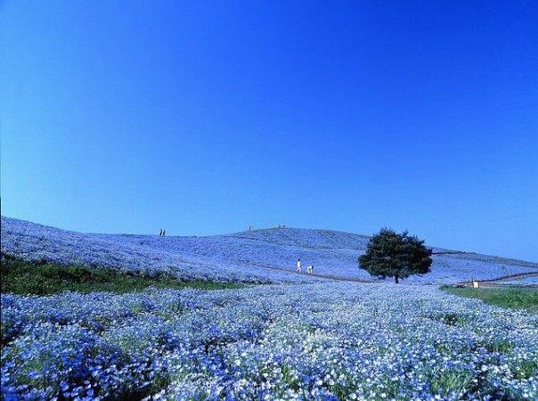 blue4)