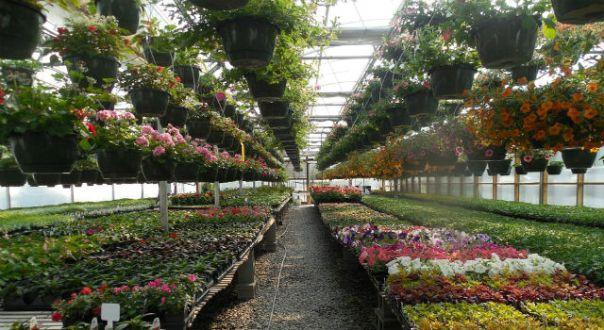 invernadero-vivero-plantas-cultivo-flores-hyde-park
