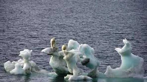 TRES MIL OSOS POLARES «DERROTAN» AL CAMBIO CLIMÁTICO PESE A DISPONER DE UN MES MENOS DE HÁBITATS HELADOS PARA CAZAR, EN COMPARACIÓN CON HACE 25 AÑOS