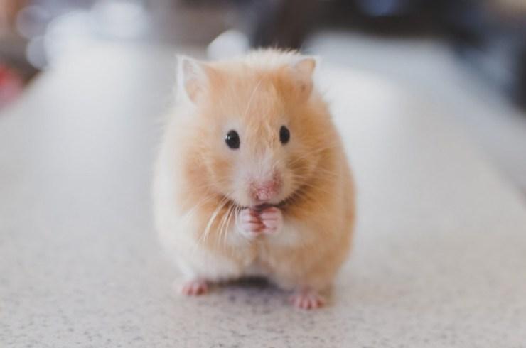 Hamster love level up of esteem