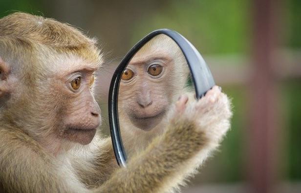The monkey mind mirror effect