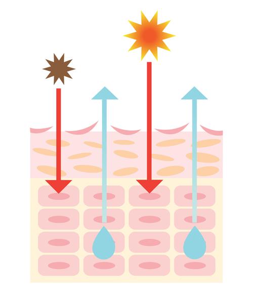 乾燥肌は紫外線に弱い説明画像