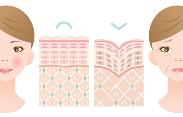肌ダメージの説明画像