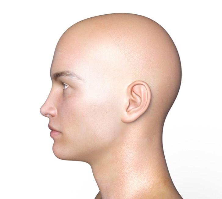 頭皮の解説画像