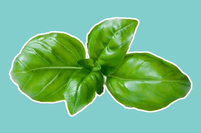 05-8-natural-recipes-for-amazing-skin-from-a-plastic-surgeon-basil