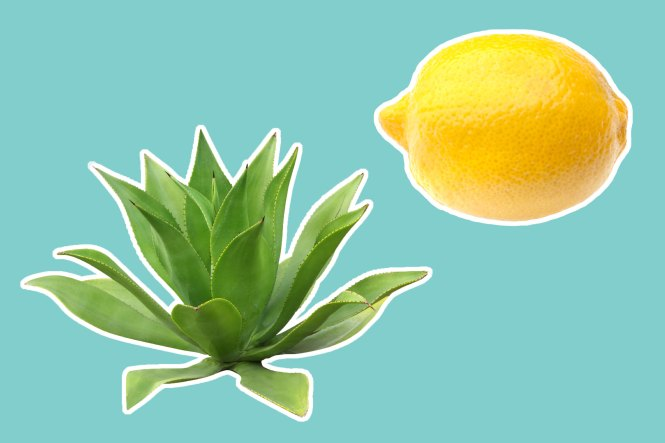 06-8-natural-recipes-for-amazing-skin-from-a-plastic-surgeon-agave-lemon