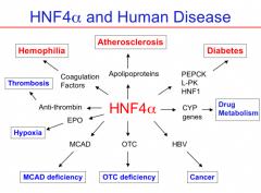 Hepatocyte Nuclear Factor (HNFa)