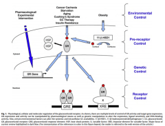 Glucocorticoid Receptors: Gateways to Control Your Levels of Stress, Inflammation, & Anxiety