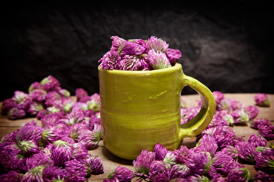 10 Benefits Of Red Clover Side Effects Selfhacked