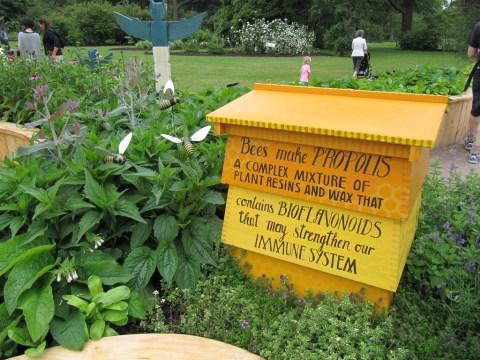 bees make propolis