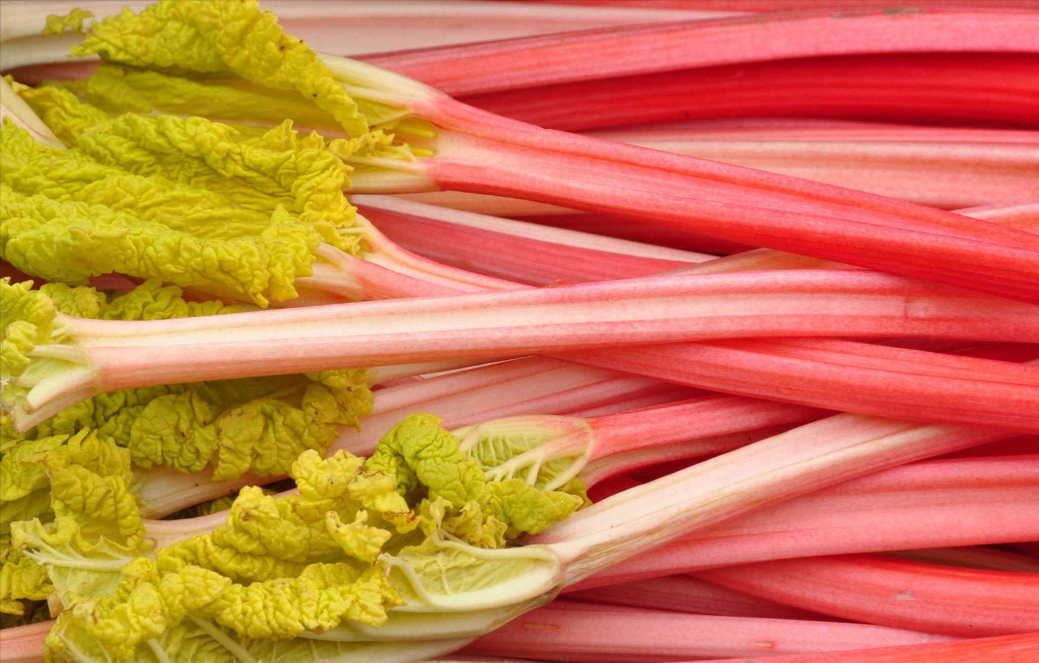 27 Surprising Rhubarb Benefits + Side Effects, Dosage ...