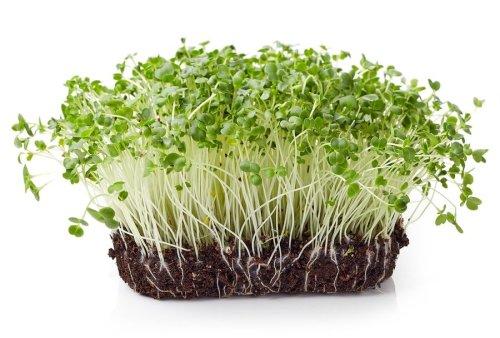 39 Sulforaphane Benefits Foods Supplements Broccoli