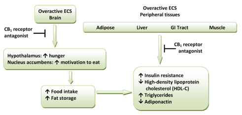 Hypothetical model for the metabolic effects of CB1 receptor antagonists. (ECS=endocannabinoid system)