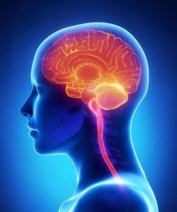 brain_133874900