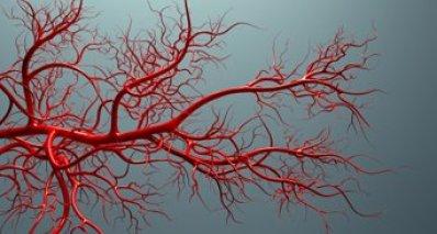 blood-vessels_iStock