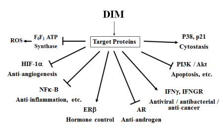 diindolylmethane-dim-biological-activities