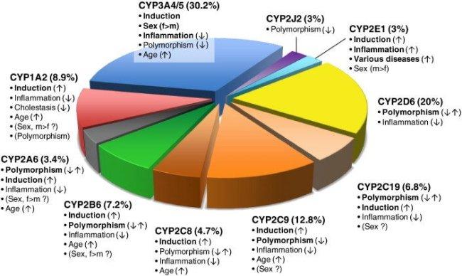 cyp-function