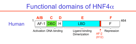h4_domain_structure2