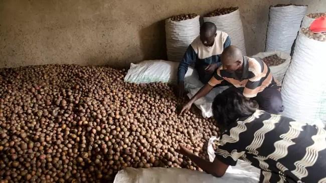 potato uganda650