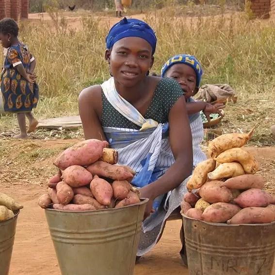 Lifetime Gifts 2016 Potatoes