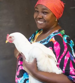 Charity Christmas gift for Africa chicken