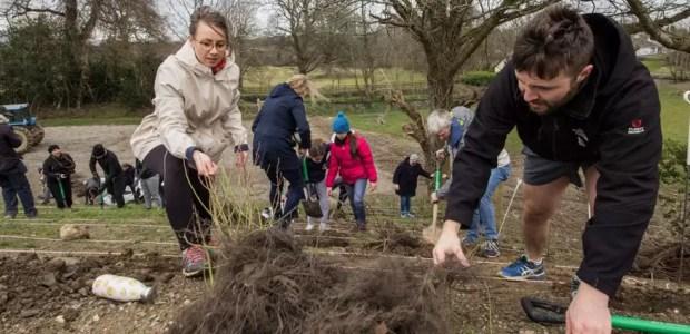 Corporate Tree Planting