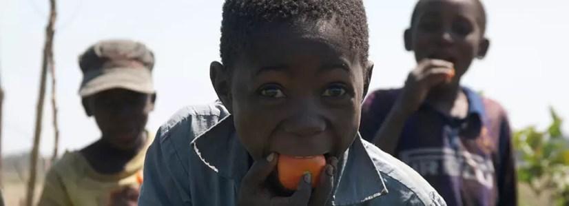 tomato-marketing940