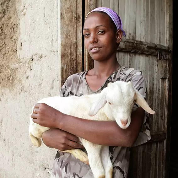 Christmas gift for Africa goats