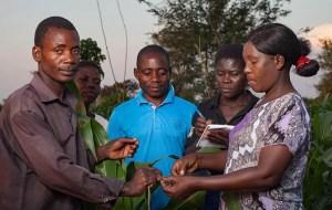 farmer-group-malawi