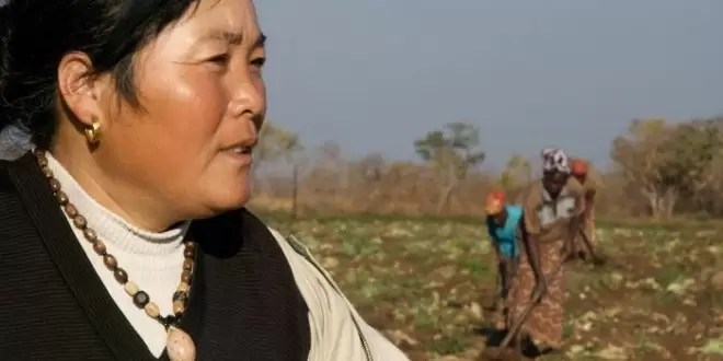 The Chinese will play an important role in agriculture development