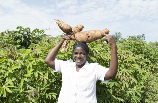 DAMARIS SUCCEEDS WITH CASSAVA