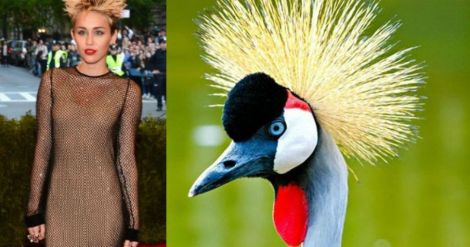 wild-fashion-fails-met-gala-28035