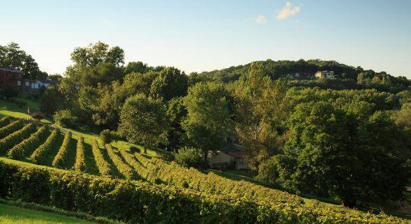 hermann-hill-vineyard-slide