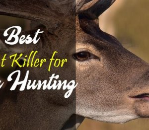 Best Scent Killer for Deer Hunting