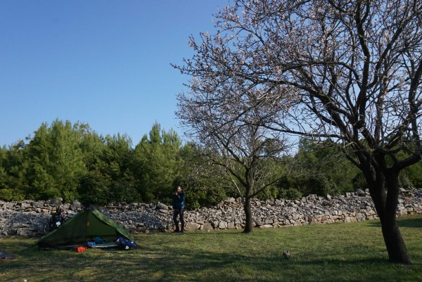 The most idyllic camp spot yet, under a cherry tree in a hilltop olive grove on the island of Korcula