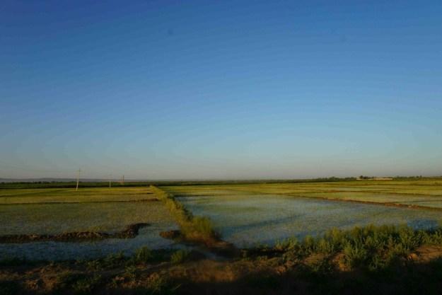 Rice paddies near Gurlan, Uzbekistan