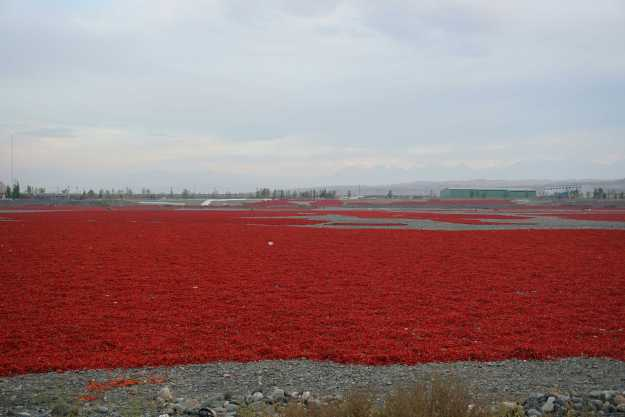 Acres of chillies drying next to the road in Xinjiang