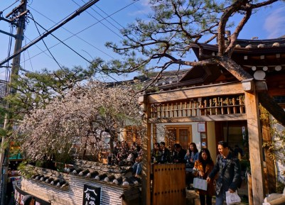 Early cherry blossoms in Bukchon Hanok traditional village, Seoul