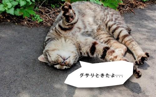 pic_77_3