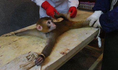 World Lab Animal Day